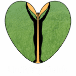 Unifying Field, Seedlings, Golden Plant, Non-profit project, Art project, artists Huub en Adelheid Kortekaas, De Tempelhof, awareness, sustainable future, Changing awareness,foodprint, climate change, unifying our World