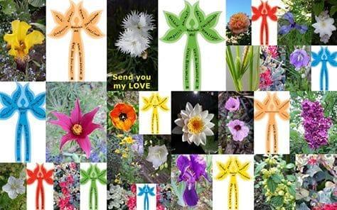 Which Flower are You?, Zaaiproject 99.999 MensBloemen, kunstenaarsduo Adelheid & Huub Kortekaas, De Tempelhof, community art, Quantum Art, Bloemen, Flowers,